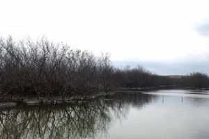 Cận cảnh rừng ngập mặn chết khô cạnh 'núi rác thải' của nhà máy phân bón