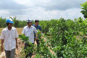Phát triển nông nghiệp theo hướng đa dạng