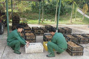 Thu giữ số lượng lớn gà giống và trứng vịt nhập lậu