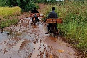 37 gốc cây gần chốt bảo vệ rừng Mang Yang bị 'xẻ thịt'
