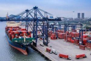 Bất chấp Covid-19, hàng container qua cảng biển vẫn tăng hai con số
