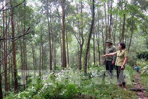Tăng cường giám sát quản trị rừng và thương mại gỗ bền vững