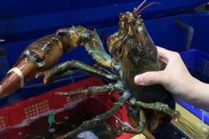 Chị em nội trợ Hà thành lùng mua hải sản không còn nguyên vẹn