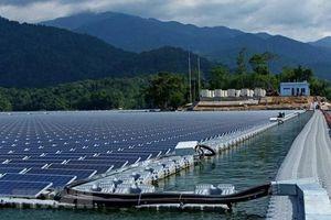 Bình Định tiếp tục xin chuyển gần 127ha đất rừng để làm 2 nhà máy điện mặt trời hơn 5.000 tỷ