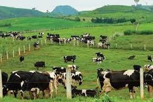 Mộc Châu Milk bị phạt do chậm đăng ký giao dịch chứng khoán