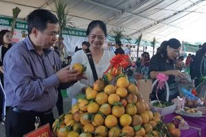 Tuần lễ cam Cao Phong năm 2020 diễn ra từ ngày 6 - 11/11