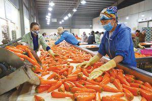 Thẩm định, xếp loại 231 cơ sở sản xuất, kinh doanh, chế biến nông, lâm, thủy sản