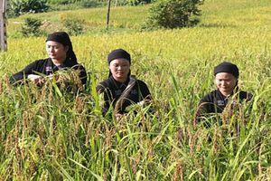 Hà Giang: Người dân La Chí rộn ràng tổ chức lễ mừng cơm mới