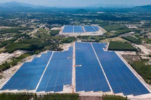 Bình Định xin chuyển hàng trăm ha đất rừng để làm điện mặt trời