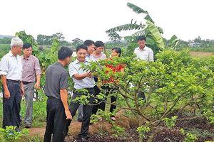 Chuyển giao tiến bộ kỹ thuật cải tạo vườn tạp: Hội Làm vườn tạo phong trào lớn