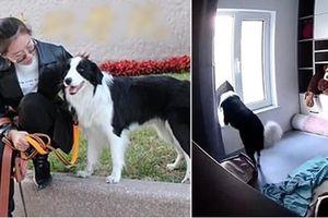 Xem lại camera gia đình, cô gái bất ngờ khi biết chú chó ở nhà làm những gì khi cô đi làm