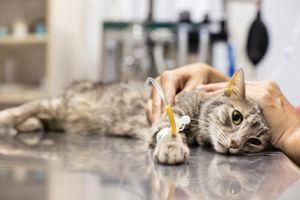 Dư luận Trung Quốc phẫn nộ vụ mèo mang thai bị dội nước sôi
