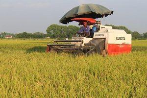 Ứng Hòa đi đầu sản xuất lúa Japonica