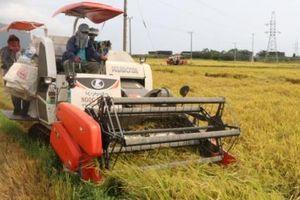 Một năm sản xuất lúa thắng lợi trong điều kiện thời tiết khắc nghiệt