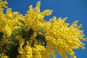 5 loài hoa dễ trồng, bung nở đẹp rực rỡ nhất vào mùa đông