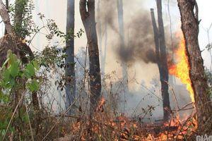 Đắk Nông: Rừng thông bị 'đầu độc', yêu cầu kiểm điểm nhiều tổ chức, cá nhân