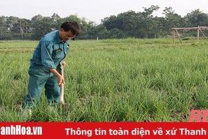 Kết quả chuyển đổi cơ cấu cây trồng trên đất lúa