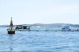 Công tác giao khu vực biển: Nhiều vướng mắc