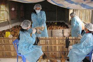 Phòng, chống dịch bệnh gia súc, gia cầm: Bảo đảm an toàn cho đàn vật nuôi