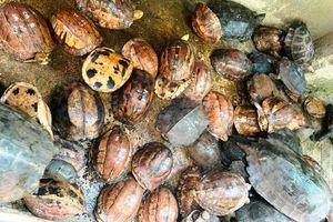 Giải cứu 515 cá thể động vật hoang dã