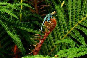 EU thông qua chiến lược bảo vệ đa dạng sinh học