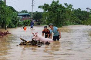 Chính phủ hỗ trợ khẩn cấp 500 tỷ đồng cho các tỉnh miền Trung chống lũ lụt