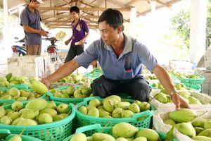 Trồng cây ăn trái lợi nhuận cao