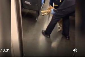 Mèo bị 'mời' ra khỏi tàu vì chủ quên mua vé