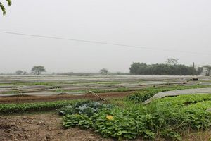 100% đất dồn điền đổi thửa tại huyện Đông Anh được cấp giấy chứng nhận