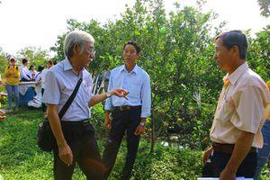 Bảo tồn vườn quýt hồng Lai Vung