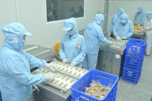 TPHCM hỗ trợ doanh nghiệp gia tăng sản xuất