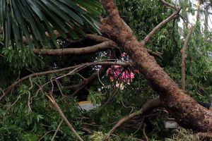 Đắk Lắk: Một người thiệt mạng, hàng nghìn ha cây trồng bị ảnh hưởng do bão số 9