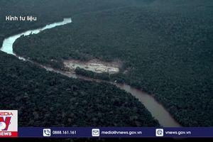Nghi vấn công ty Mỹ tiếp tay nạn phá rừng Amazon