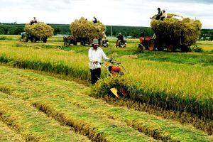 Đa dạng hóa thu nhập và vai trò các hoạt động phi nông nghiệp của nông hộ ở vùng đồng bằng sông Cửu Long
