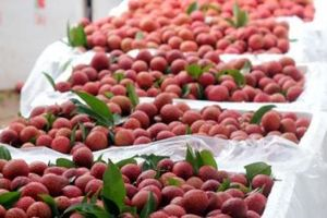 Hỗ trợ DN nắm bắt quy định mới về kiểm soát chất lượng rau quả nhập khẩu vào thị trường Trung Quốc