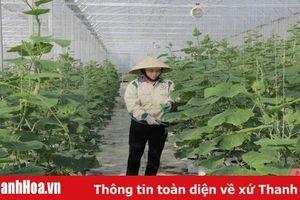 Tích tụ, tập trung đất đai ở huyện Quảng Xương