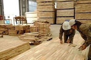 Tỷ lệ che phủ rừng tăng, vi phạm pháp luật về bảo vệ rừng giảm rõ rệt