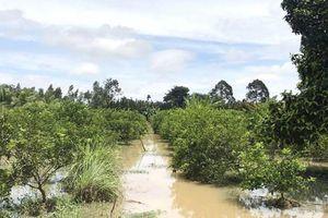Khôi phục sản xuất cây trồng bị ngập lụt, úng sau mưa lũ