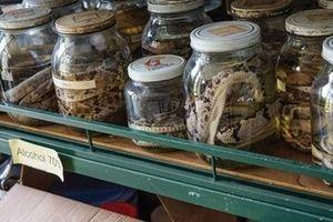 Bên trong nơi sản xuất thuốc chữa rắn cắn lớn nhất thế giới