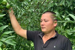 Gương sáng điển hình về Người nông dân làm kinh tế giỏi tại huyện Thạch An, Cao Bằng