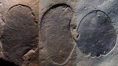 Có gì lạ trong hóa thạch loài động vật lâu đời nhất thế giới?