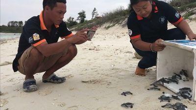 Thả 51 con rùa con về với biển
