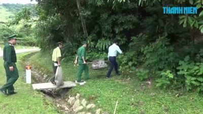 Sau lần hút chết, 5 con cầy hương, 12 con rùa được trở về rừng sâu