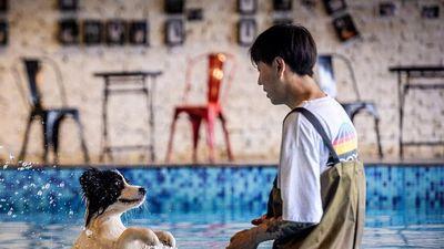 Chi nửa triệu USD xây nhà cho chú chó giúp mình đổi đời