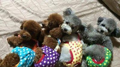 Than thở vì chị gái mê mẩn nuôi cả đàn chục con chó, cô nàng không ngờ lại có người quan tâm đến bà chị