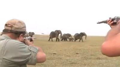 Clip: Đồng loại bị bắn chết, đàn voi nổi điên truy sát thợ săn