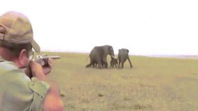 Thợ săn nổ súng bắn đàn voi châu Phi, bị đuổi chạy trối chết