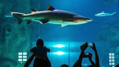 Người đàn ông vô tư khỏa thân bơi cùng cá mập