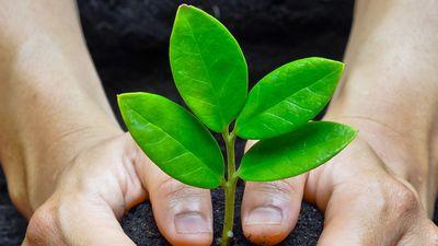 Tại sao trồng cây không còn có thể cứu sống hành tinh của chúng ta được nữa?