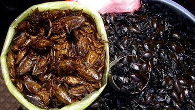 Cà niễng, đặc sản Ninh Bình khiến nhiều người khiếp vía